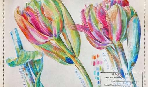 Farbstiftzeichnnen und Botanical Diary