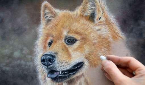 Tiere zeichnen in Softpastell auf Velourpapier